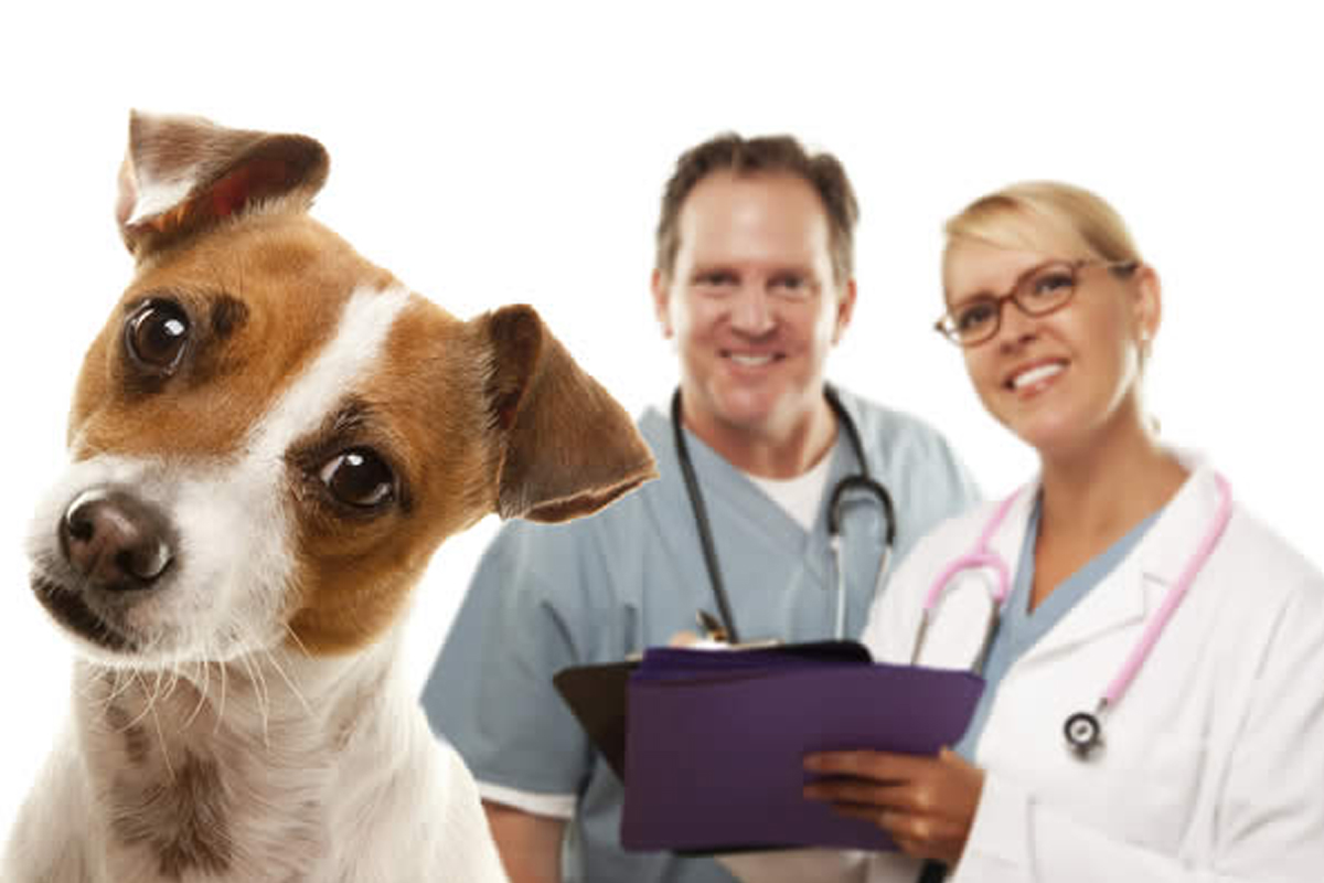 veterinary medicine important to animals and Start studying unit 1 vocabulary learn i think that ethics are important to veterinary science and medicine our animals are family members to most of us.